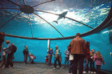 Zoo visitors under dolphin dome exhibit photograph