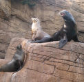 Sea lions outdoor viewing photograph